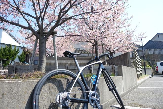 Domane(ドマーネ)で楽しむお花見サイクリング