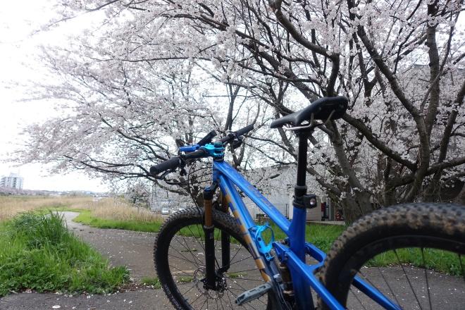 金沢市内から河北方面にお花見サイクリング